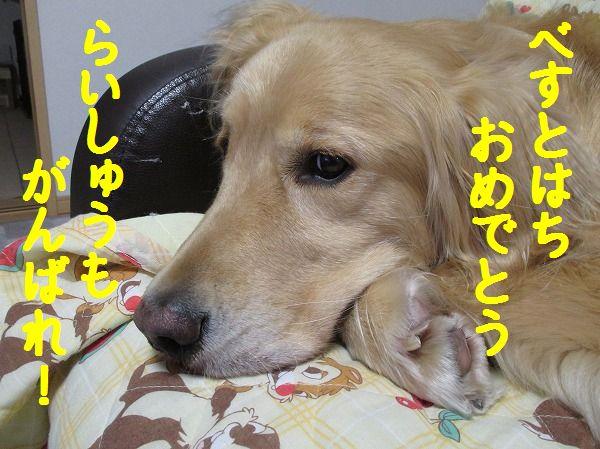 2014-5-10-ハチ-004