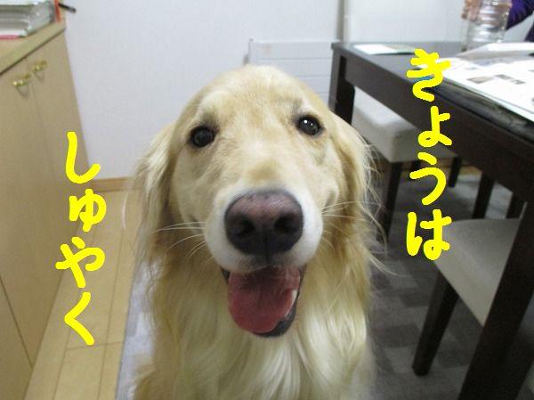 2014-5-19-ハチ-003