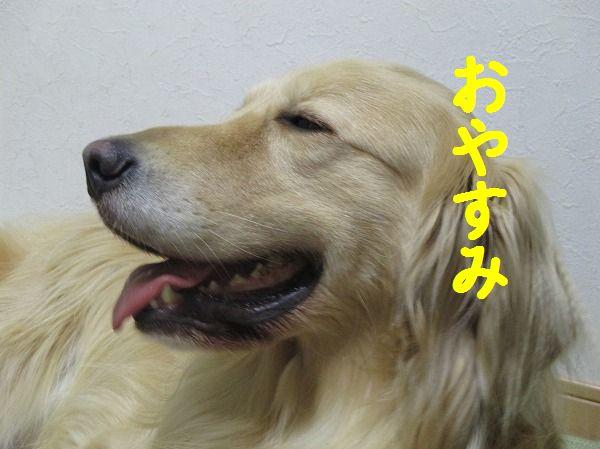 2014-5-19-ハチ-024