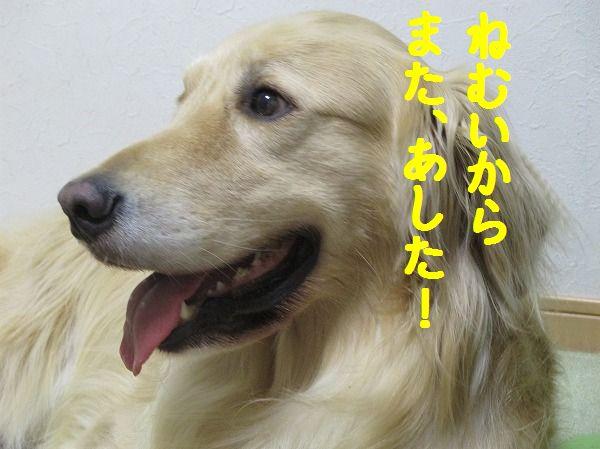 2014-5-19-ハチ-025