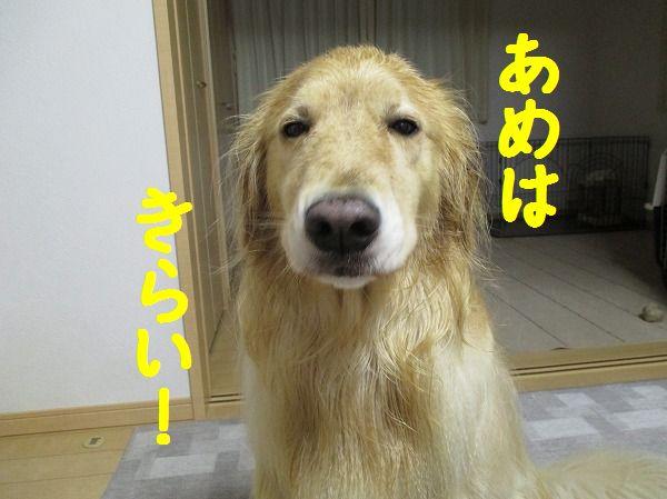 2014-5-26-ハチ-013