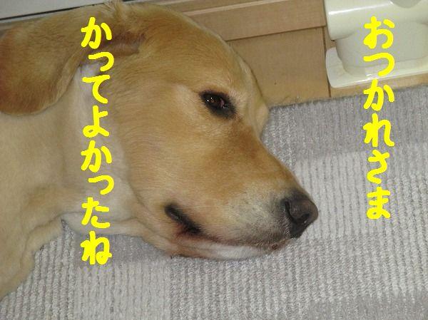 2014-6-3-ハチ-003