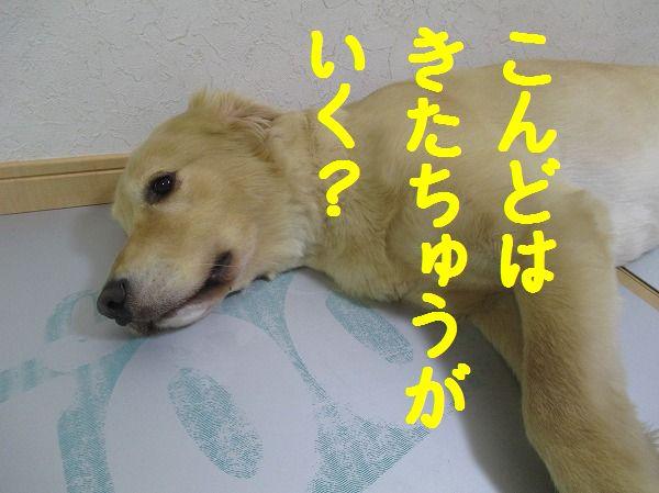 2014-7-15-ハチ-022