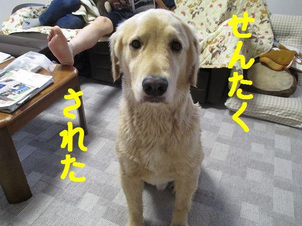2014-7-20-ハチ-010