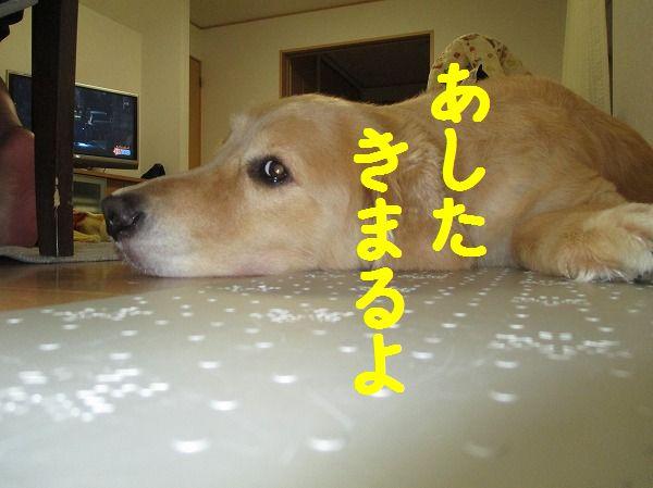 2014-7-23-ハチ-0004