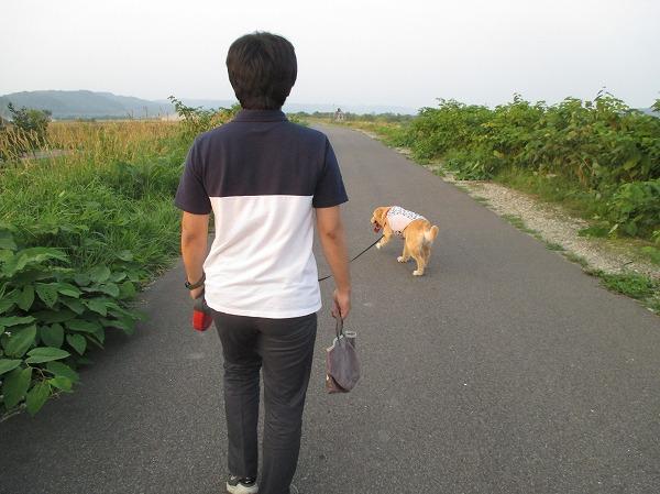2014-7-29-ハチ-003