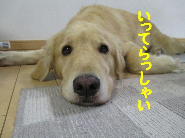 2014-7-29-ハチ-008
