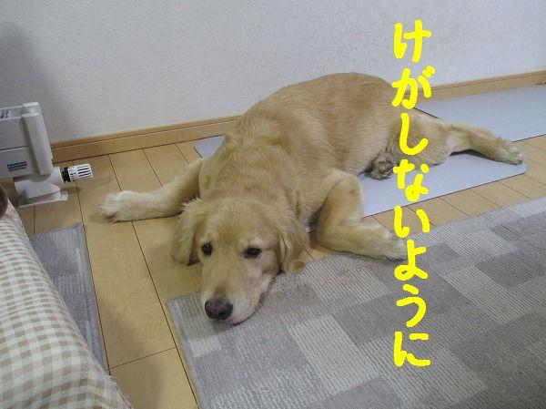 2014-8-13-ヒナとチイ-018