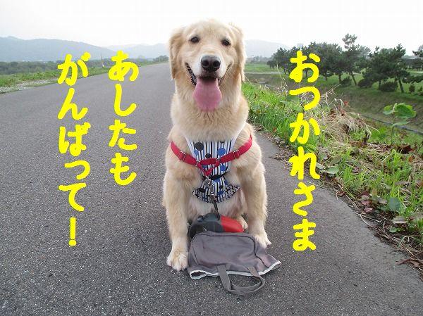 2014-8-23-ハチ-006