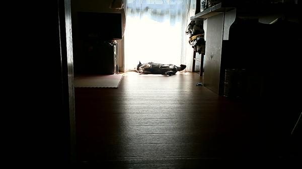 日向ぼっこ中