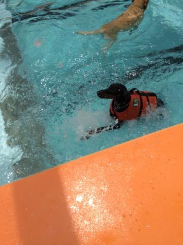 水泳ちう?