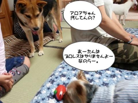 2014063007.jpg