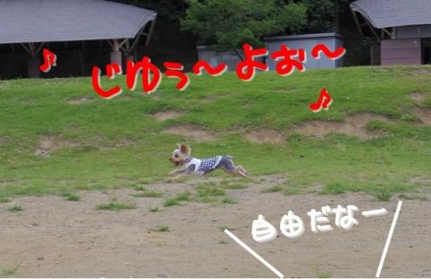 2014073109.jpg