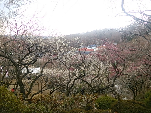百草園02