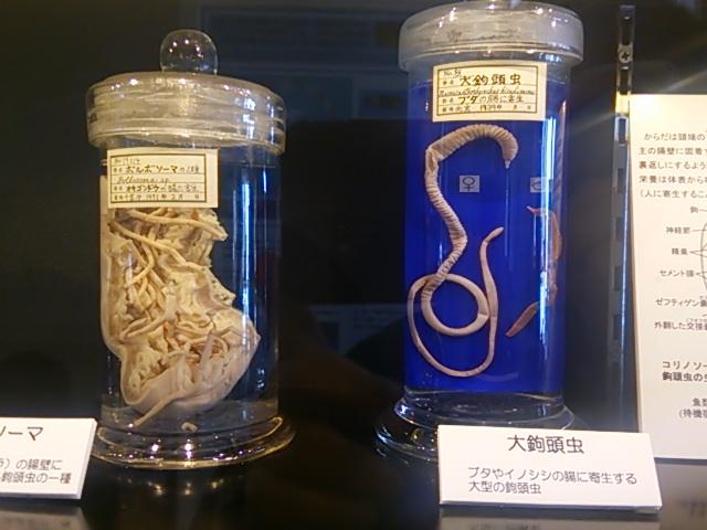 目黒寄生虫館03