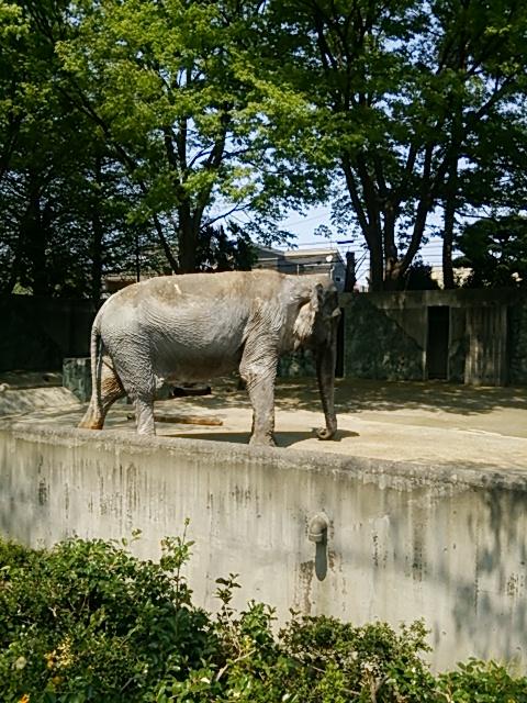 井の頭自然文化園13