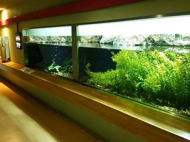 井の頭自然文化園22