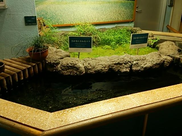 井の頭自然文化園23