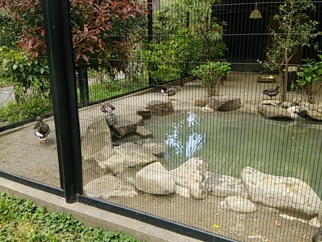 井の頭自然文化園26