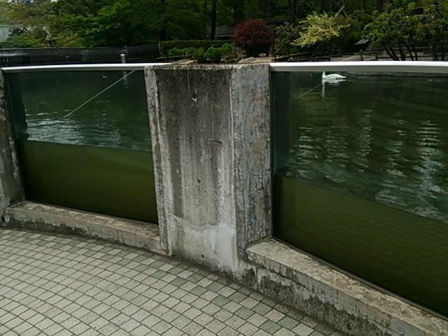 井の頭自然文化園28