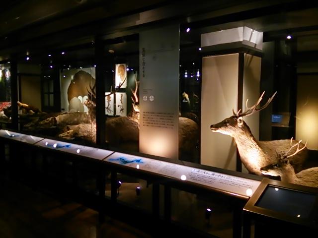 国立科学博物館日本館5