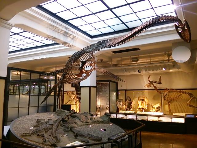 国立科学博物館日本館3
