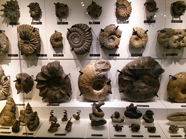 国立科学博物館日本館4