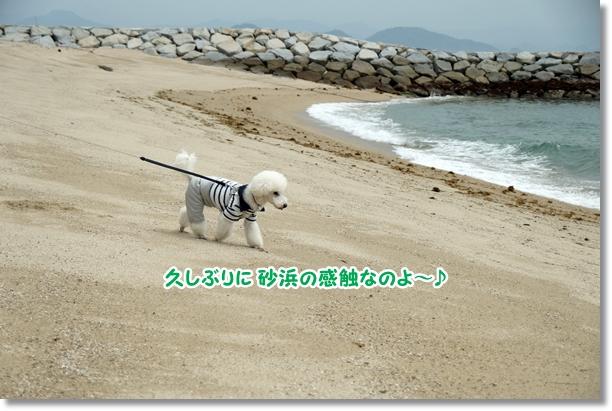 久々に海♪5