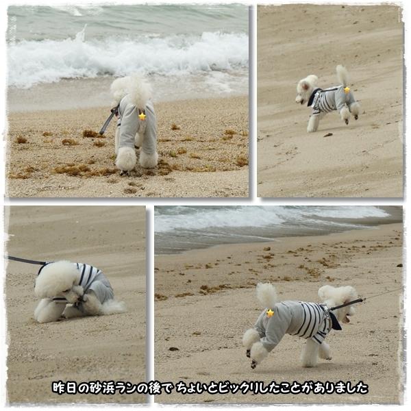 砂浜ランの後で驚いた1