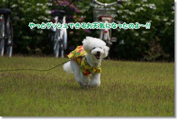 芝生でダッシュ!!1