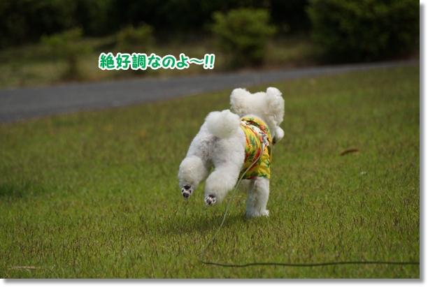 芝生でダッシュ!!2