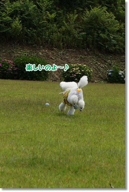 芝生でダッシュ!!4