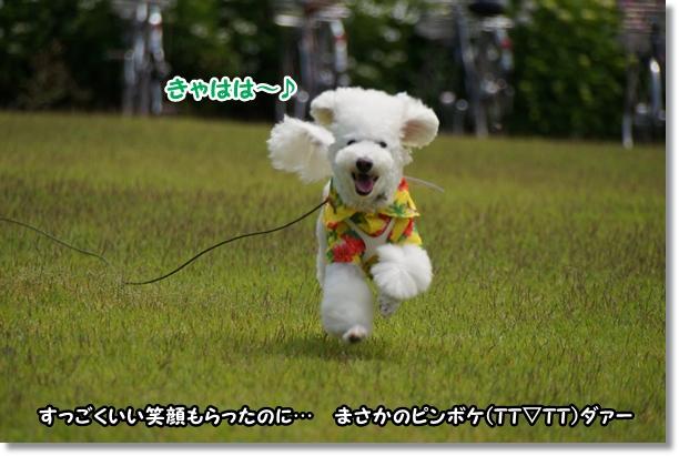 芝生でダッシュ!!5