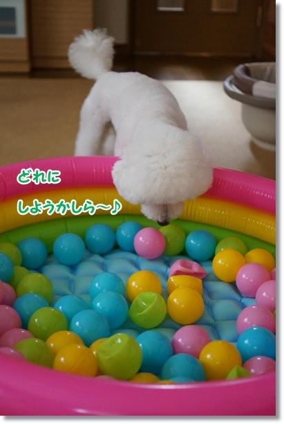 プールは楽しい♪