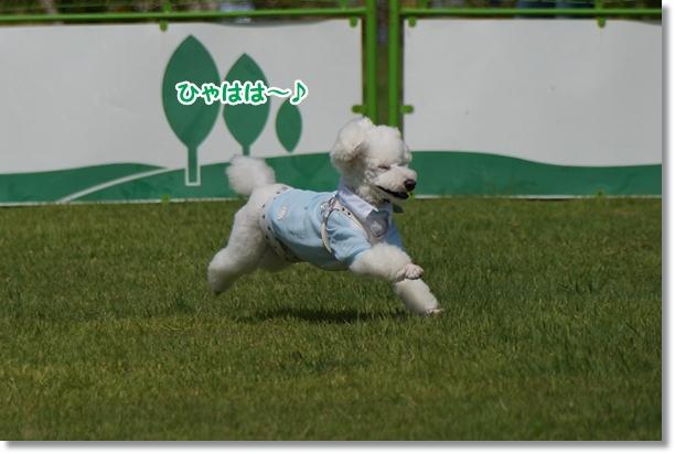飛ぶ!!3