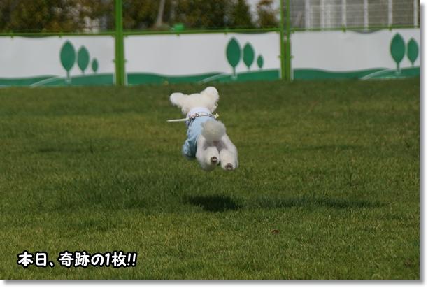 飛ぶ!!4