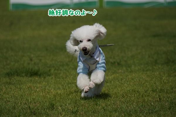 飛ぶ!!5