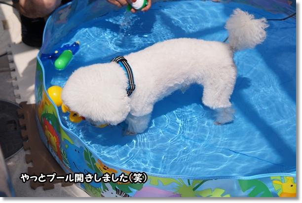 やっと プール開き(^_^;)1