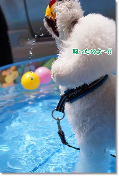 やっと プール開き(^_^;)2