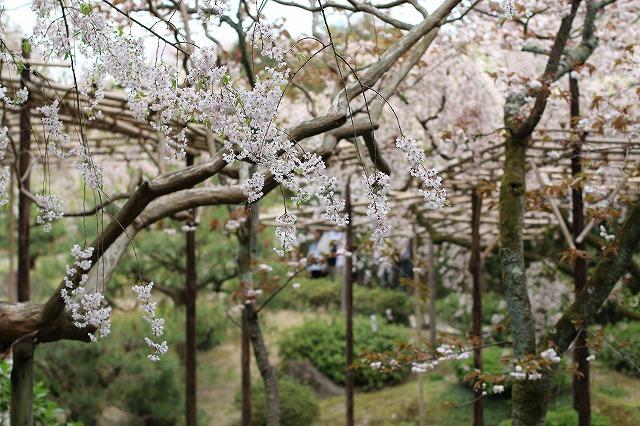 IMG_0649平安神宮