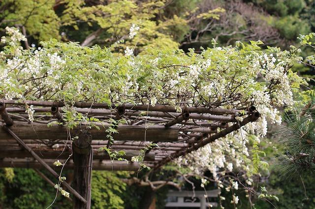 IMG_0676平安神宮