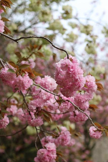 IMG_0692平安神宮