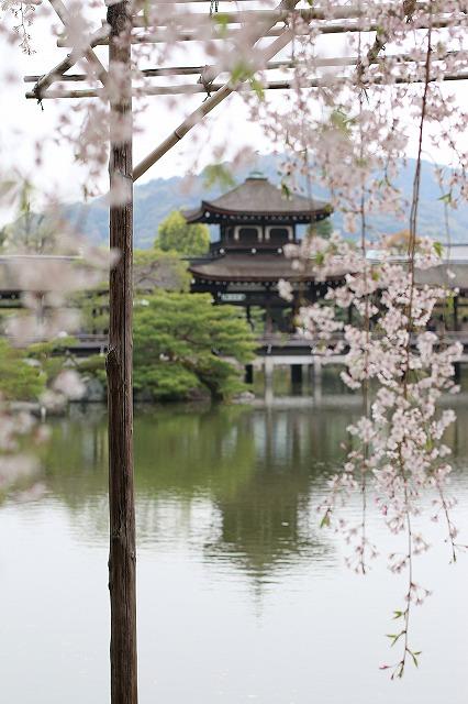 IMG_0729平安神宮