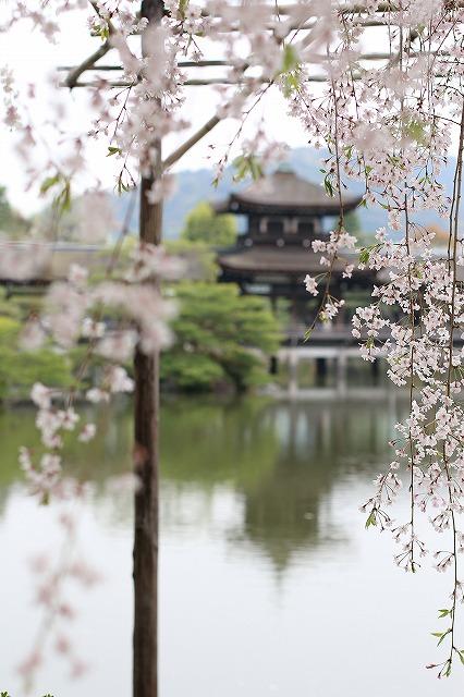 IMG_0730平安神宮