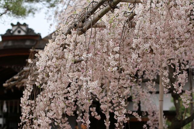 IMG_0749平安神宮