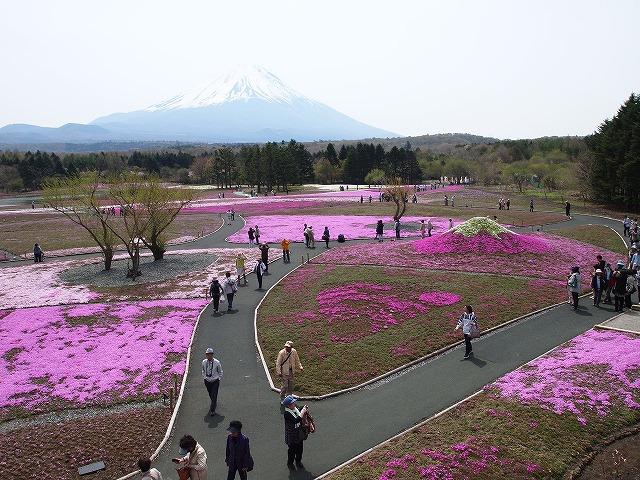P5091757芝桜