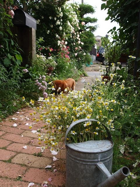 P5211835なおみんさんのお庭
