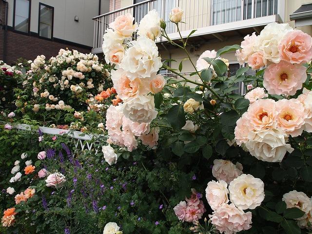 P5211850なおみんさんのお庭