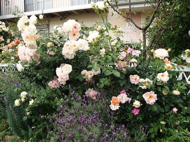P5211854なおみんさんのお庭