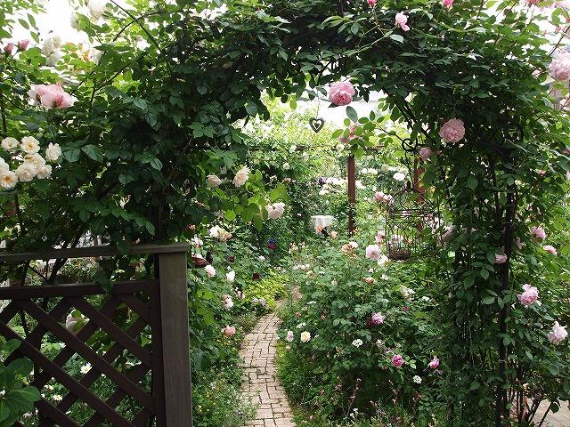 P5211864ゆうさんのお庭